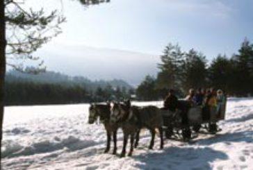 Sulle montagne friulane su una slitta trainata da cani