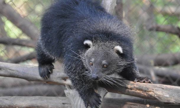 L 39 orso gatto la new entry dello zoo di napoli travelnostop - Gatto solo in casa per 15 giorni ...