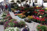 Torna l'8^ edizione di 'Tolmezzo in fiore' tra piante, musica e lavoro
