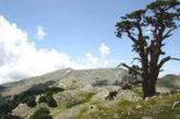 Mirabilia, un itinerario per far scoprire il fascino del Pollino e non solo