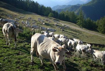 Da Abruzzo, Molise, Puglia, Campania, Lazio e Basilicata ok a protocollo interregionale su tratturi