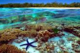 Per Unesco Grande barriera corallina non è 'in pericolo'. Critiche dagli ambientalisti
