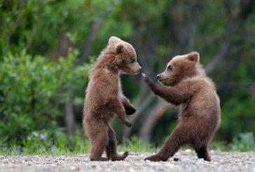 Trento, sit-in animalisti 'per salvare orsi'