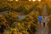Sightseeing Pass Australia, 40 tour online per scoprire il South Australia