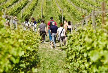 Franciacorta,  Wine Trekking nella tenuta dell'Azienda Al Rocol