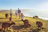 Nuovo tour in South Australia che sposa 'Island to Outback