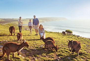 Australia, alla scoperta di Kangaroo Island con il pacchetto del TO Ki Odyssey