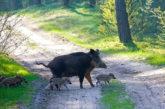 Parco Aspromonte avvia percorso per ottenimento Cets