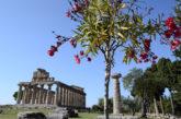La Bmta celebra i suoi 20 anni a Paestum e parla arabo