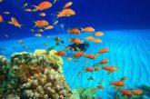 Eden Viaggi e Aerdorica fanno ripartire i voli per Sharm El Sheikh