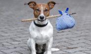 In vacanza con Fido e Micio, i consigli del veterinario per un viaggio perfetto