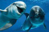 Golfo Aranci punta sul dolphin watching per arricchire l'offerta turistica