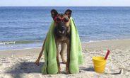 Più della metà degli italiani porterebbe i propri animali in vacanza con sé