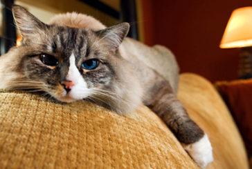 Italia amica degli animali, ecco la top 10 delle destinazioni più pet-friendly
