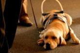 Multa per albergatore di Rimini che non accetta cani guida per i ciechi