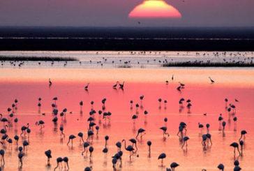 Unesco, parco spagnolo Donana a rischio per inquinamento