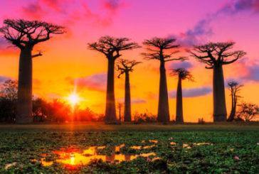 Madagascar protagonista di un monografico del Diamante