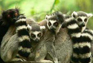 Tutto esaurito per il Madagascar di Swan Tour