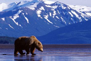 Royal Caribbean nell'estate 2020 torna in Alaska con 3 navi: aperte le prenotazioni
