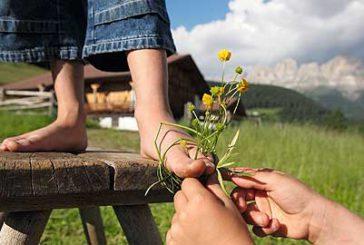 Associazione Agriturismo Trentino chiede più attenzione per settore