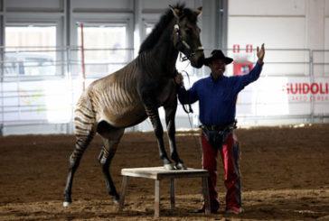 Cavalli e cavalieri alla ribalta al Westernshow di Verona