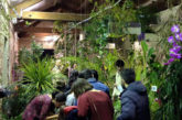 Da marzo riapre i battenti la Casa delle Farfalle di Modica