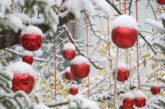 Natale a Isernia, accesi i 3 alberi nelle piazze