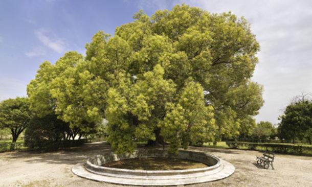 Nasce la mappa per scovare tutti i giardini di Napoli