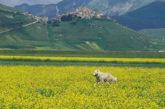 Effetto sisma, turisti in fuga da Valnerina. Cciaa: effetti negativi in tutta Umbria