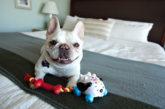In aumento gli alberghi pet-friendly in tutta la Penisola e nel mondo
