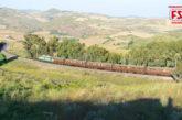 Treni turistici aperti a tutti sulla Ferrovia dei Templi per il Mandorlo in Fiore