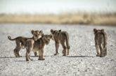 Fotosafari in Sudafrica a misura di bambini con Mappamondo