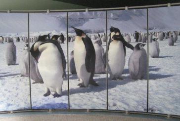 Genova, sindacati protestano contro chiusura Museo Nazionale Antartide