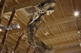 Alla mostra 'Dinosauri' del Mudec soggiornando al Novotel Milano Nord Ca' Granda