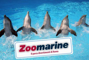 É nato Zoomarine TO, il tour operator del parco marino di Roma