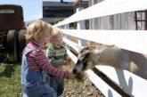 Trentino regione più attrezzata per soggiorni family-friendly in agriturismo