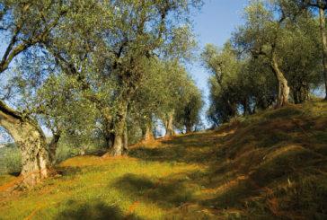 Ad ottobre ad UmbriaFiere torna 'Eco Natura, Salone Del Turismo Rurale'