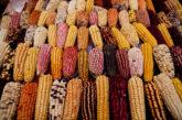 Perù, compie 10 anni 'Mistura, l'evento gastronomico di Lima