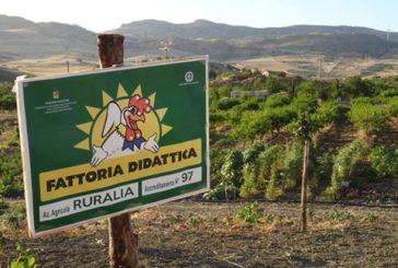 La fattoria didattica Ruralia di Alia celebra la Festa di San Martino