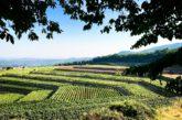Enoturismo sull'Etna: eventi e degustazioni con ViniMilo 2017