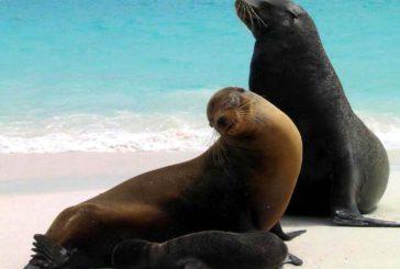 Alla scoperta dell'Ecuador e delle Galapagos con King Holidays