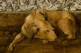 I ritratti degli animali per promuovere i musei italiani