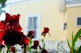 Ponti di primavera a Villa La Tonnara di Porto Cesareo