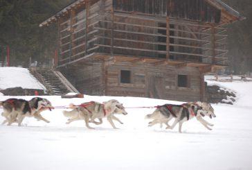 Lezioni di sleddog a Sauris per diventare dei veri 'musher'