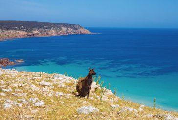 Qantas lancia nuovi voli da Adelaide e Melbourne per Kangaroo Island