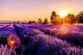 Dalla Provenza a Singapore ecco 10 destinazioni dalle tonalità 'ultra violet'