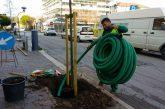 'Green Booking' torna a piantare alberi a Misano e Cattolica