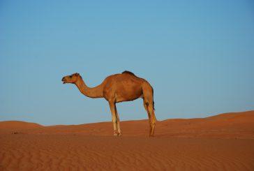 Due proposte targate Evolution Travel per ammirare il Sultanato dell'Oman