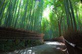 Idee per Viaggiare inizia il 2018 puntando sul Giappone con un fam trip