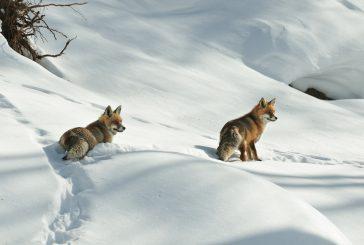 San Valentino per tutti i gusti negli alberghi della Valle d'Aosta